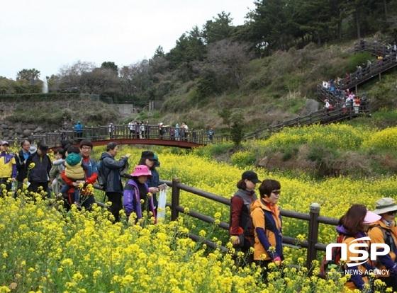 지난해 국제걷기대회에 참가자들이 유채꽃밭을 지나고 있다. (사진 = 서귀포시관광협의회)