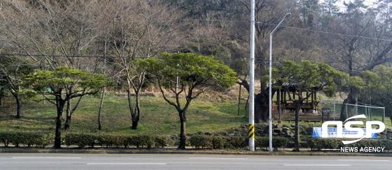 여수버스터미널~미평삼거리 구간 전정 작업이 완료된 가로수 모습