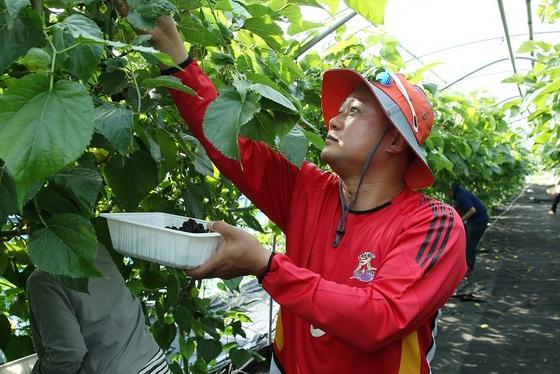 김정호 부의장이 영농 철 부족한 일손으로 어려움을 겪고 있는 농가를 방문해 일손 돕기 봉사활동을 펼치고 있다. (사진 = 광명시의회)