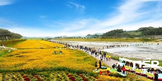 장성군이 지난 해 개최한 장성 황룡강 노란꽃 잔치. (사진 = 장성군)