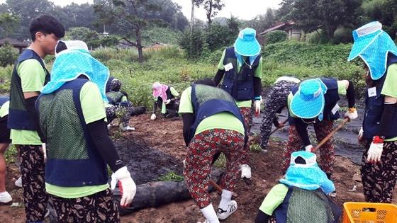 ▲한밭대 학생들 금산에서 농촌봉사활동