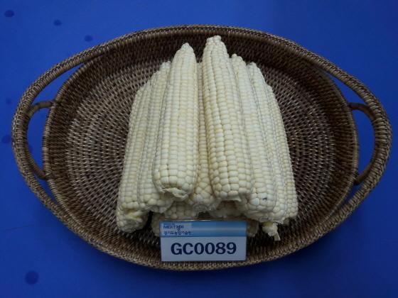 경기도 대표 흰색 찰옥수수 GC0089. (사진 = 경기도)