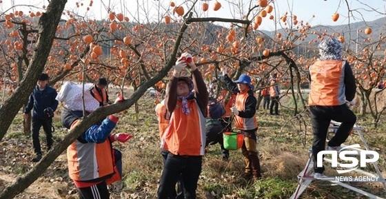 전남농협이 15일 실시한  농촌 일손돕기 활동. (사진 = 전남농협)