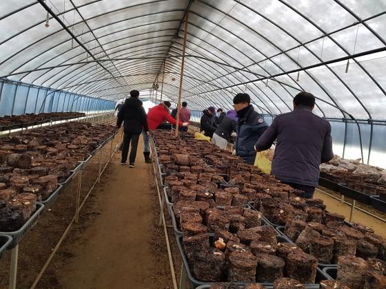 7일 경기도 광주시 초월읍 소재 농가에서 사회봉사명령 대상자들이 버섯 재배 부산물 제거 작업을 하고 있다. (사진 = 성남준법지원센터)
