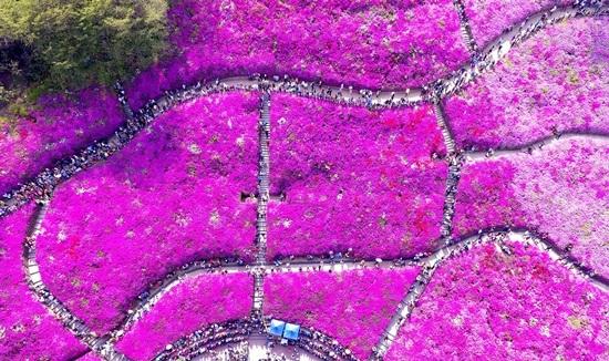철쭉동산 자료 사진 모습. (사진 = 군포문화재단)