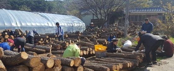 ▲아산시농업기술센터 기술지원과 직원들이 느티장승 마을을 찾아 농촌일손을 도왔다. (사진 = 아산시)