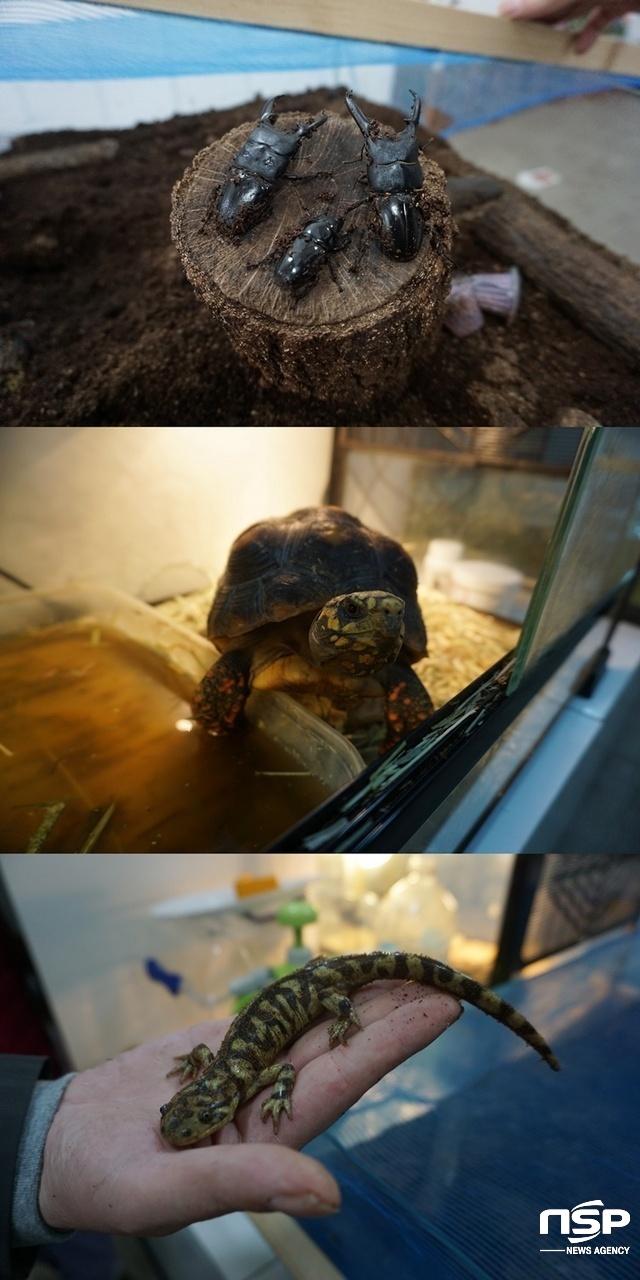 위로부터 안산 와동곤충체험관에 전시돼 있는 장수풍뎅이, 거북이, 도마뱀. (사진 = 나수완 기자)