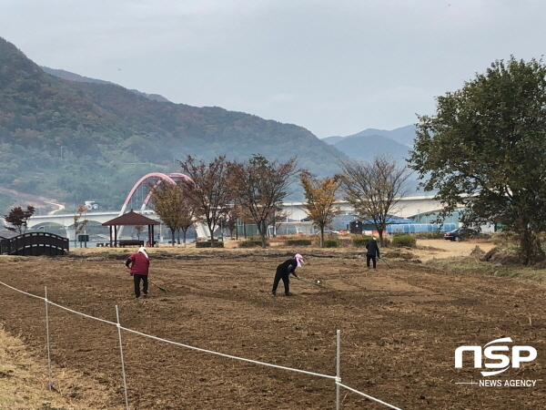 [포토]하동군, 섬진강 수변공원에 유채꽃단지 조성