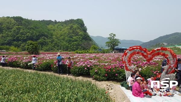 지난해 영천시 작약꽃 전람회 모습. (사진 = 영천시)