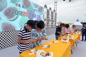 [NSP PHOTO]영암군, 무화과 축제 준비 '한창'