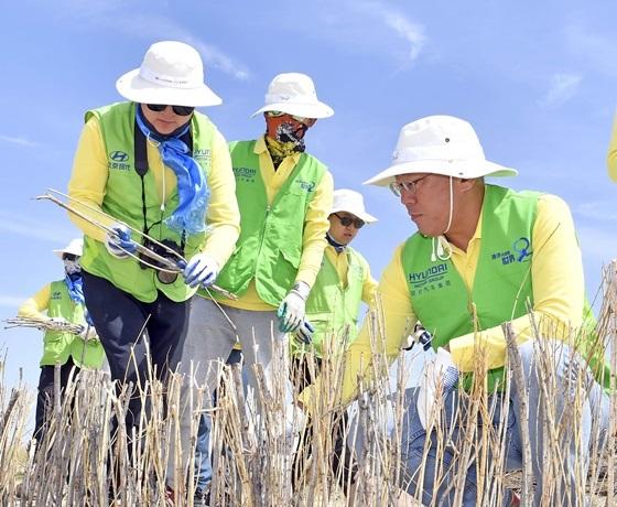 정의선수석부회장이 중국 네이멍구 정란치 하기노르의 사막화방지 사업 현장을 찾아 중국 현지 직원들과 함께 사막화방지봉사활동을 전개하고 있다. (사진 = 현대차)