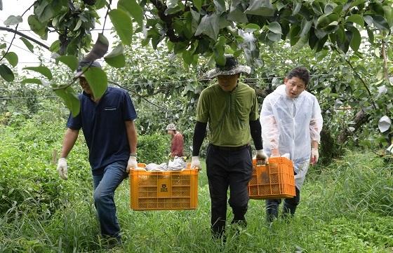▲논산시가 태풍 링링으로 인한 피해농가 지원에 나섰다. (사진 = 논산시)