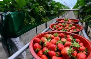 [NSP PHOTO]홍성군, '딸기통합관제시스템' 적용