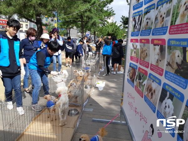 포항시는 지난 12일 영일대 해수욕장 일원에서 동물보호단체 및 봉사자 등이 참여한 가운데 2019 유기동물 입양의 날 행사를 개최했다. (사진 = 포항시)