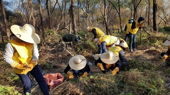 제거한 가시박 줄기에서 열매를 일일이 가위로 자르고 있는 자원봉사자들 모습 (사진 = 고양시자원봉사센터)