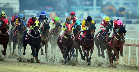 2017년 그랑프리 경주 시행 모습 (사진 = 한국 마사회)