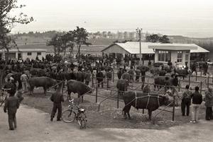 [NSP PHOTO]수원박물관, 1970년대 수원시민의 삶 '틈새전' 개최