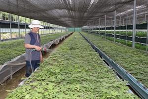 [포토]예천군, 시설원예 현대화로 농업소득 증대 전력질주