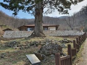 [포토]진안군, 천황사 전나무 주변 긴급 보수