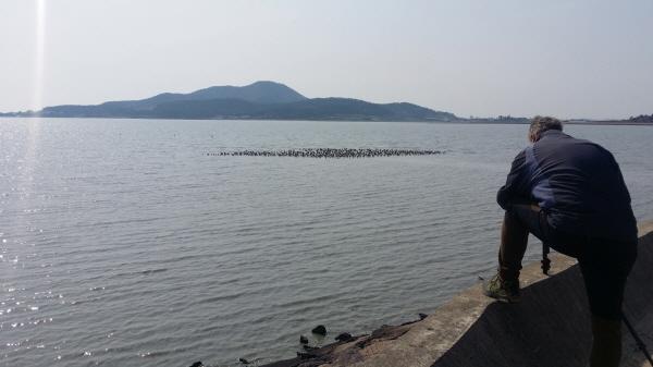 안드레아스 김, 도요물떼새 관찰 (사진 = 신안군)