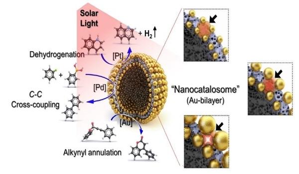 나노카탈라좀을 이용한 태양광-유도 화학반응 (사진 = 포스텍)