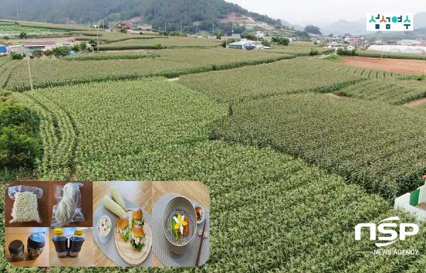 여수 옥수수 재배단지(가공제품 콘, 국수, 조청, 간장 개발과 콘 샐러드, 국수 요리를 선보이고 있다) (사진 = 여수시)