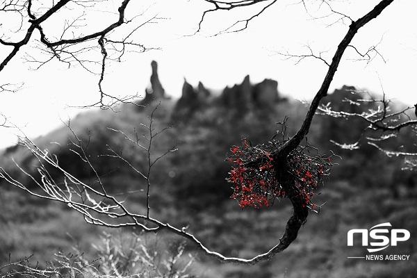 [포토]인사아트프라자갤러리, 제주 사진가 정상기 사진전 '한라산 붉은겨우살이' 초대